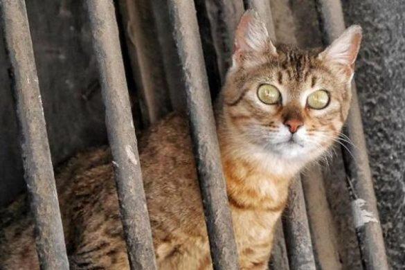 5 Manfaat Daging Kucing yang Mengejutkan