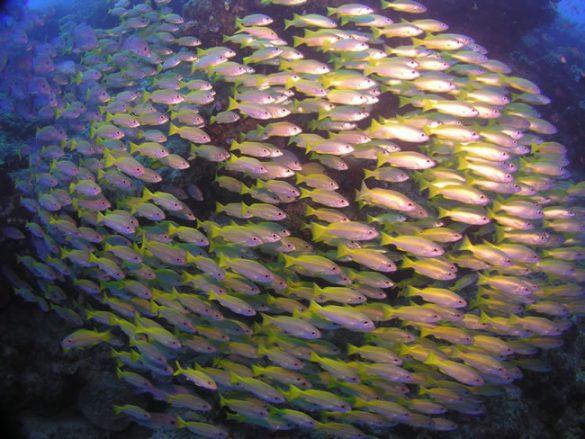 10 Manfaat Ikan Kuniran yang Kaya Zat Besi