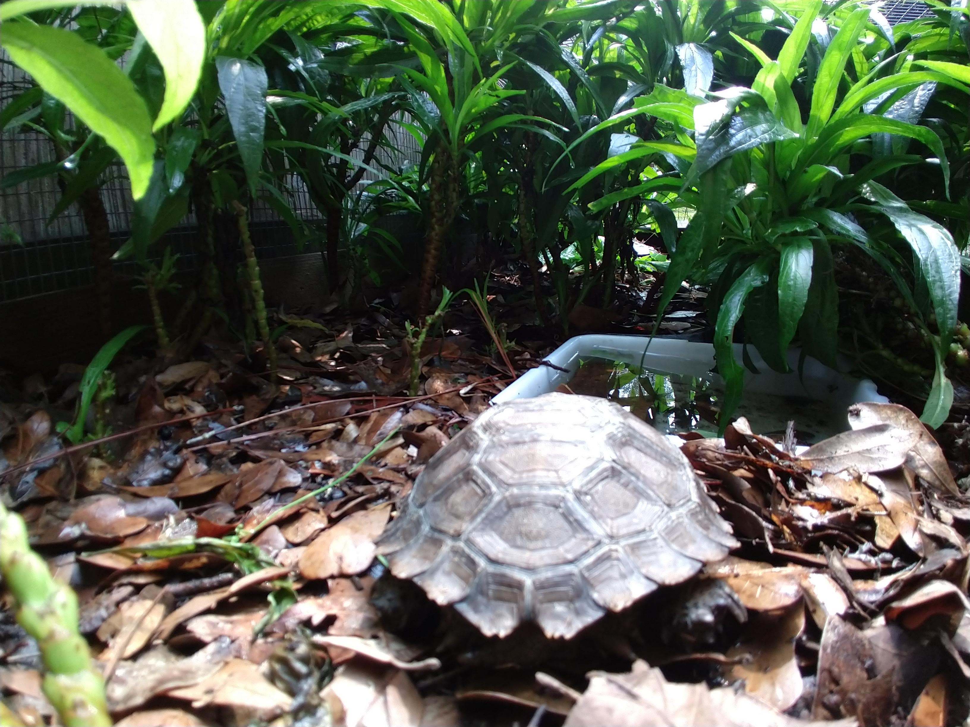 Small Mountain Tortoises