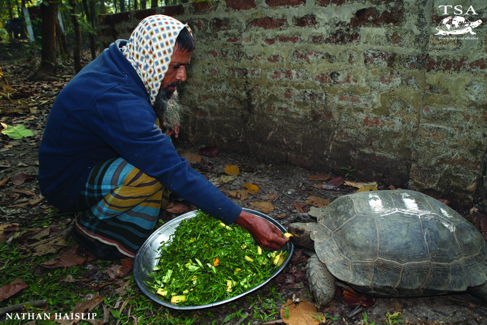 TSA Bangladesh facility for Manouria emys Mountain Tortoises