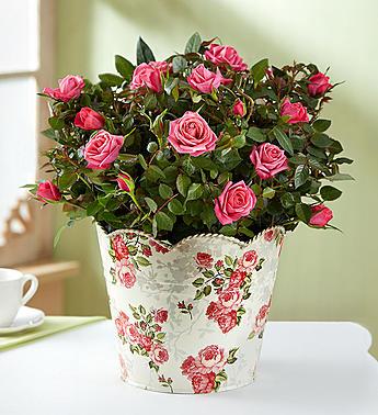 Flower Delivery International