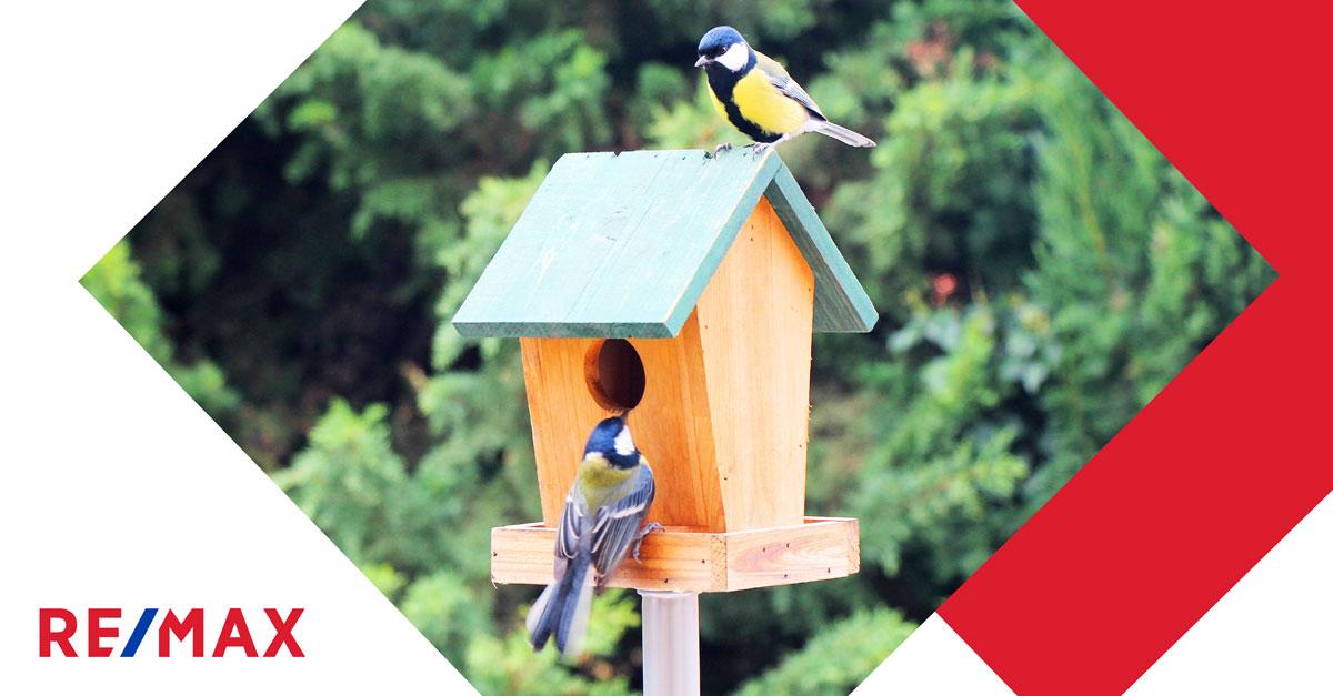 Conseils pour attirer les oiseaux dans sa cour