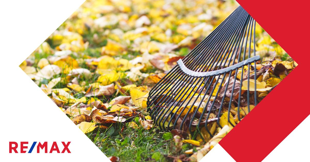 Quoi faire avec les feuilles mortes ?