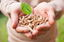 Le chauffage aux granules de bois, une solution de rechange plus écologique
