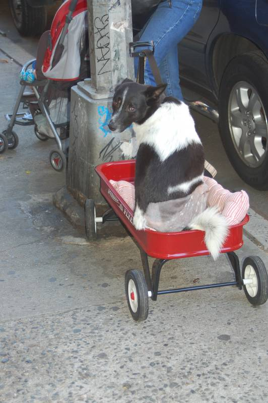 Gogo in her wagon