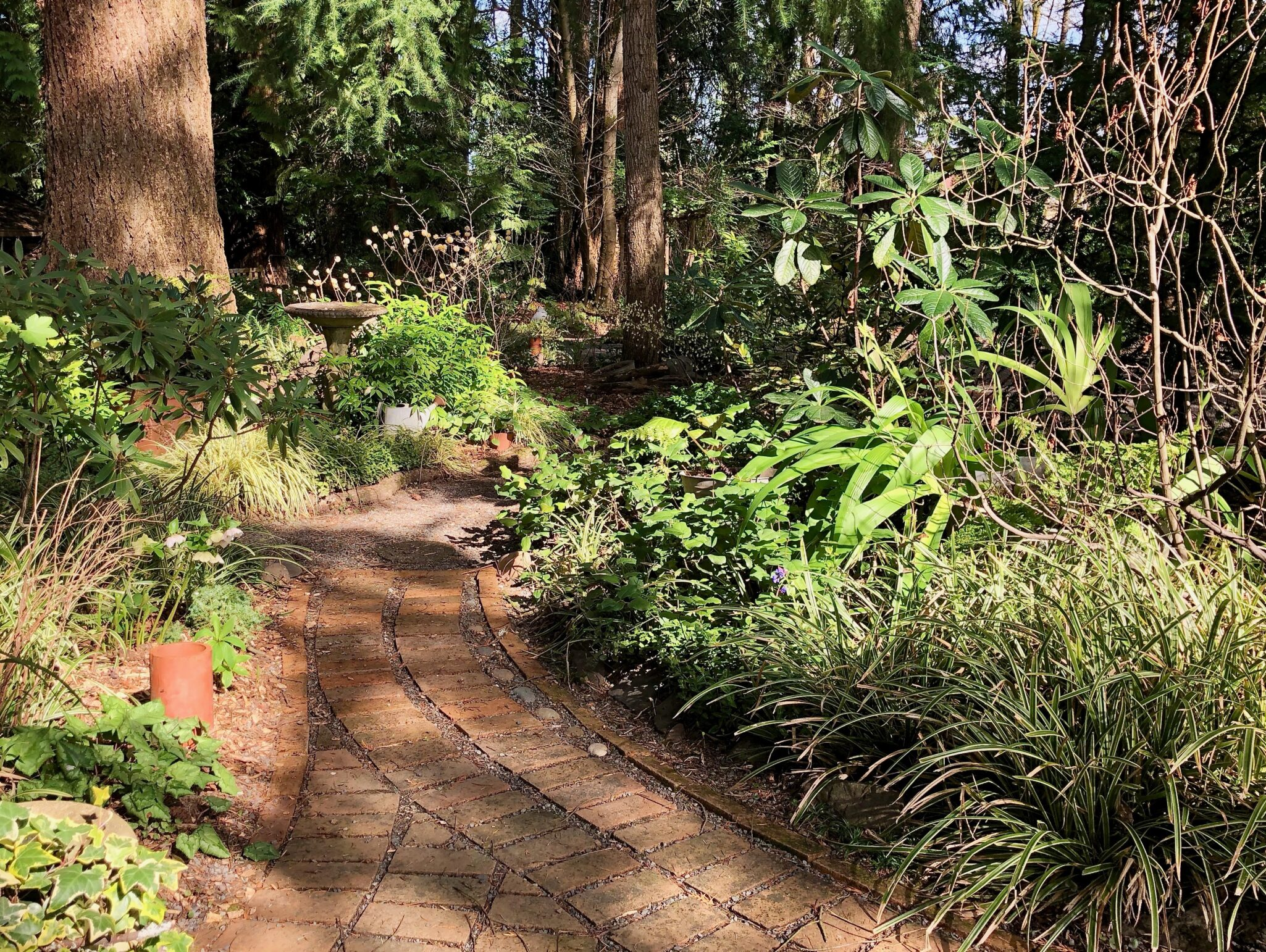 A Sister's Creation: The Lovely Heartwood Garden