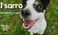 problemas dentales en los perros
