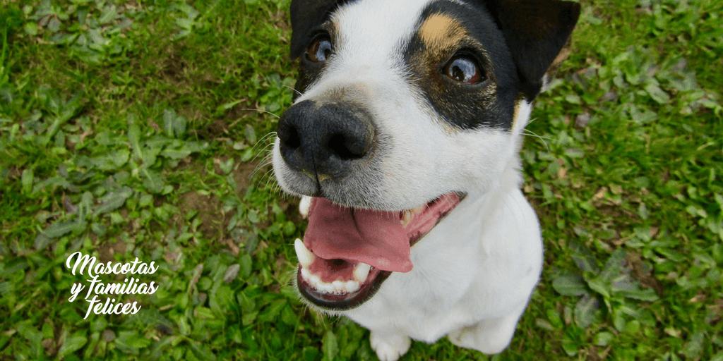 Enfermedad periodontal perros