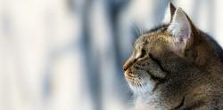 Los gatos padecen intensamente el estrés