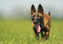 perro parque herbicidas