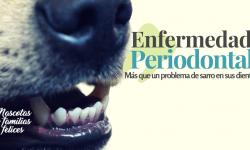 sarro en la boca de tu mascota