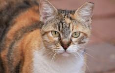 los gatos mayores pueen padecer hipertiroidismo