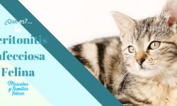 El PIF es una enfermdad muy grave en los gatos