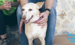 leishmaniosis en perros chispa