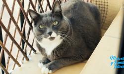 totoro el gato gorodo