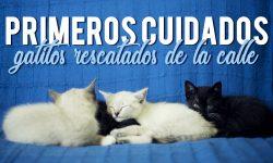 gatos pequeños rescatados
