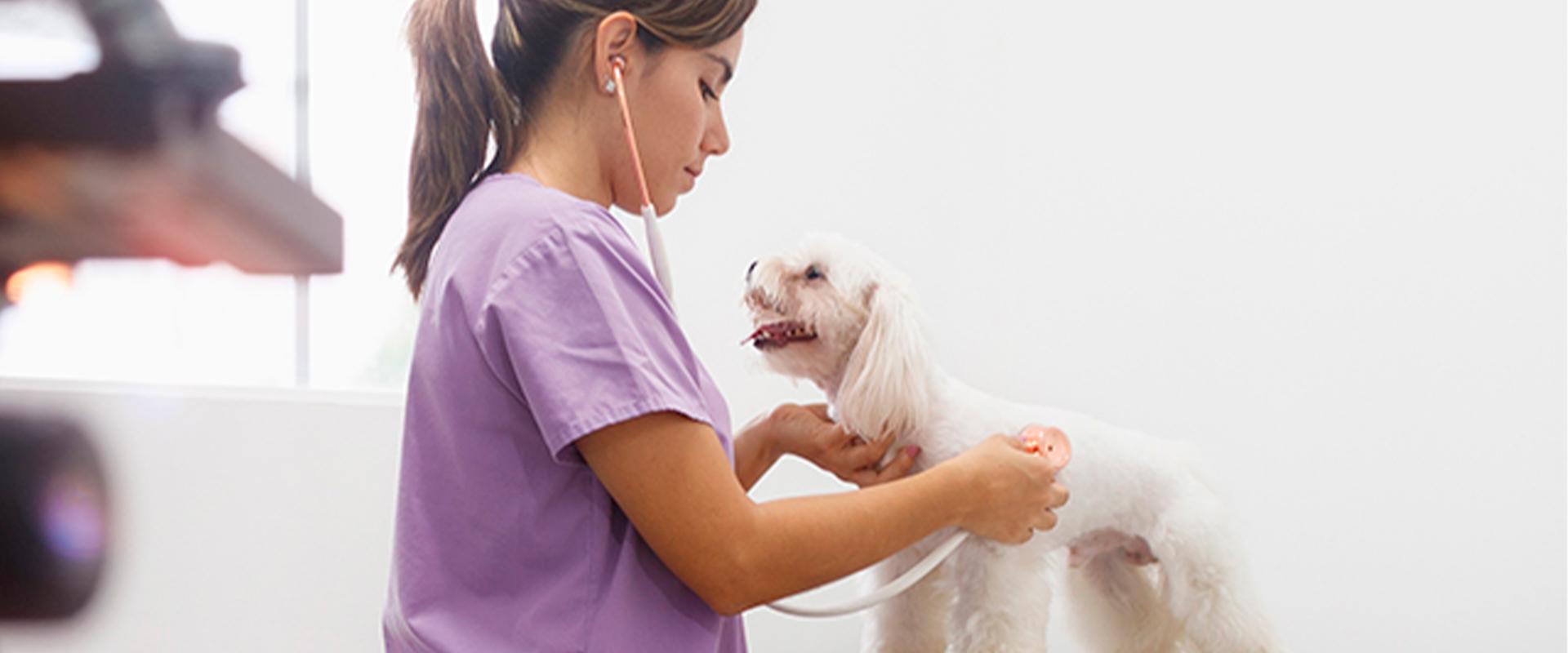 Medicina, veterinaria y zootecnia