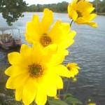 el verdadero poder de las flores