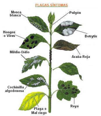 plagas y enfermedades plantas