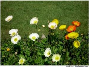 jardin-verano