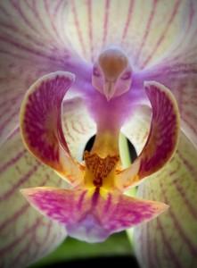 Flor con forma de pájaro colibrí