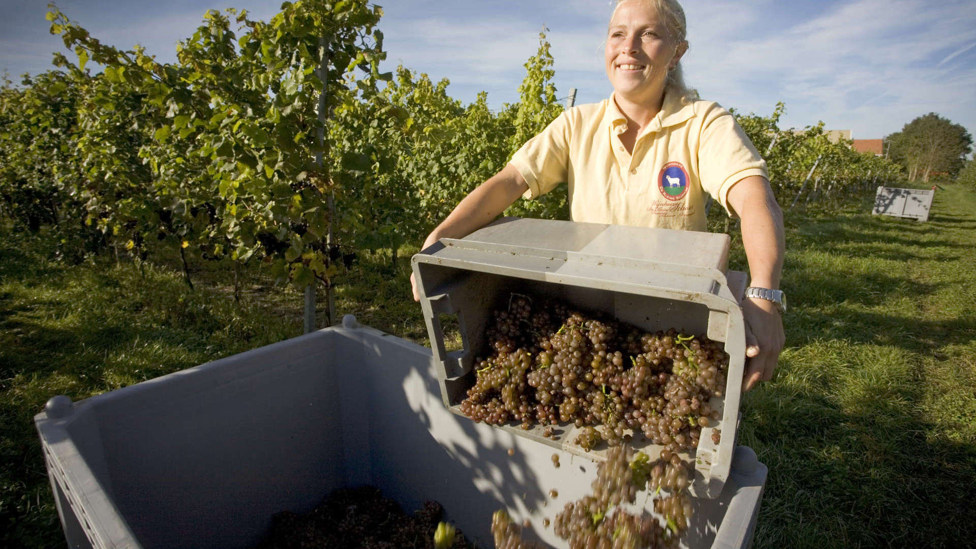 9 Things You Didn't Know About Dutch Wines - KLM Blog
