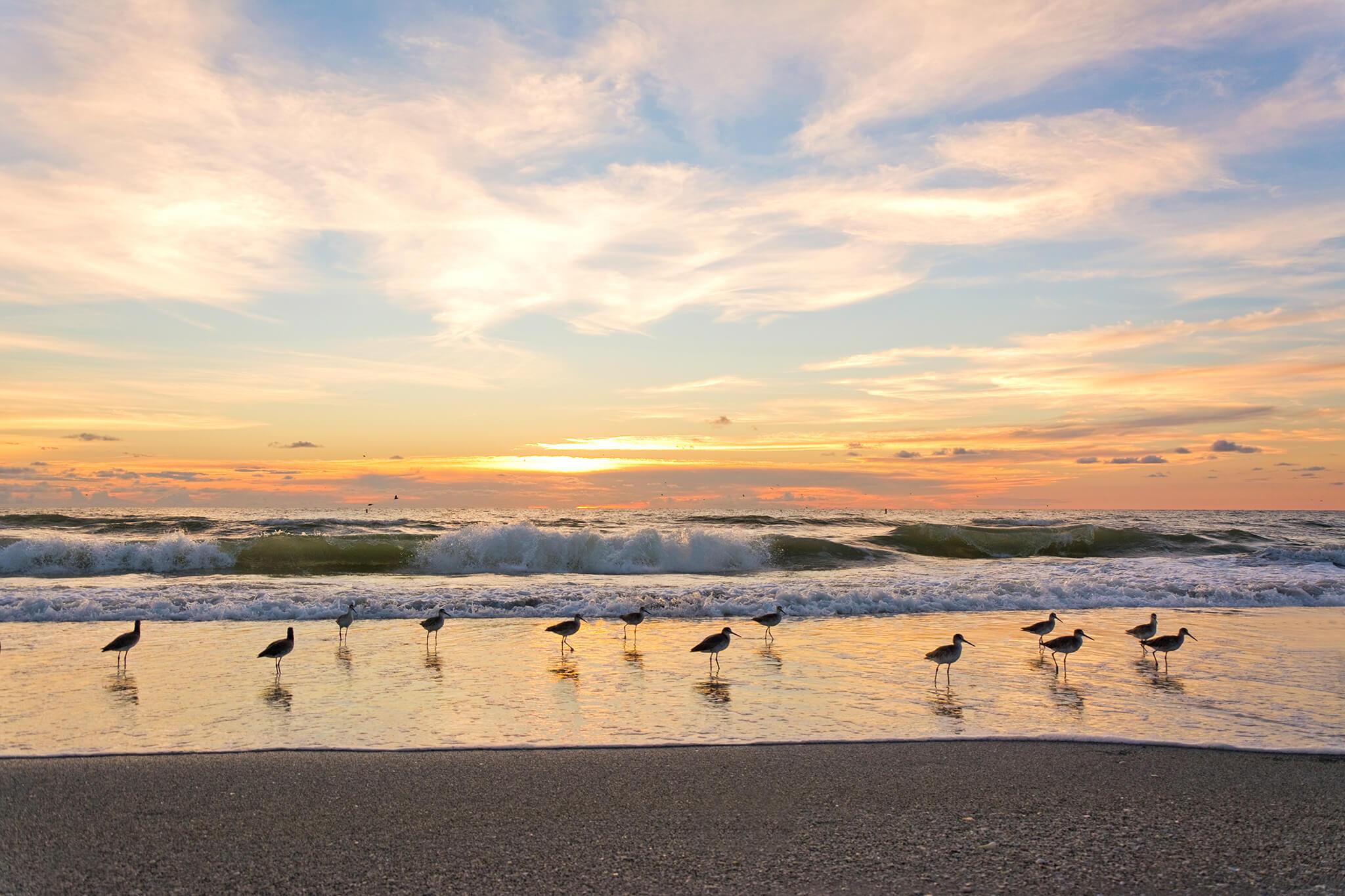 tampa florida beach