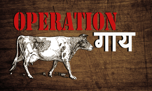 operation-cow