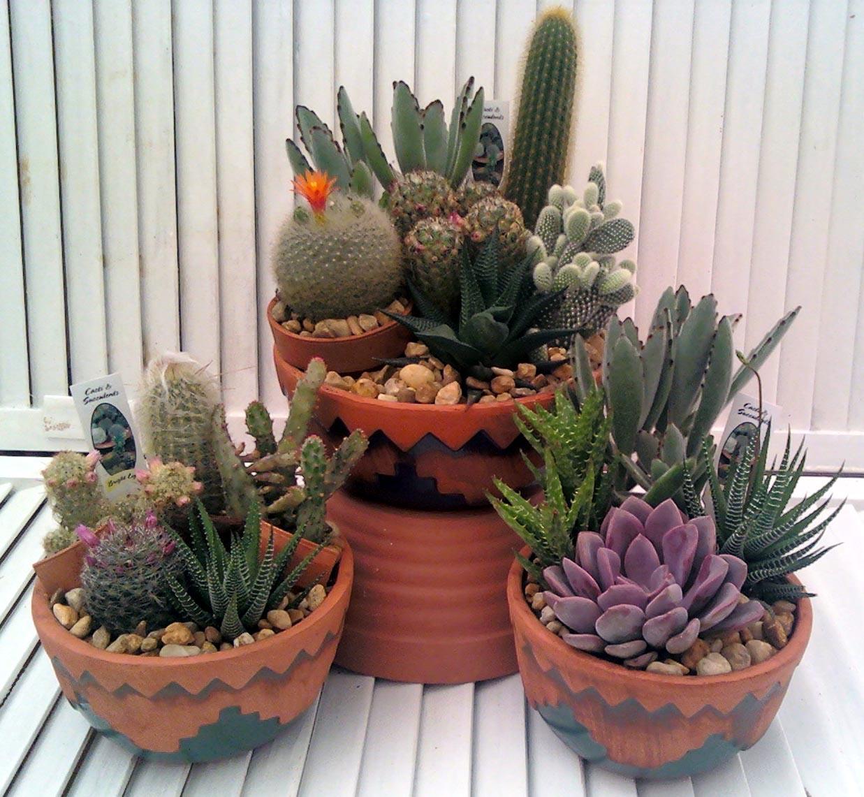 Cactus garden crooker 39 s plant master Cactus pots for sale