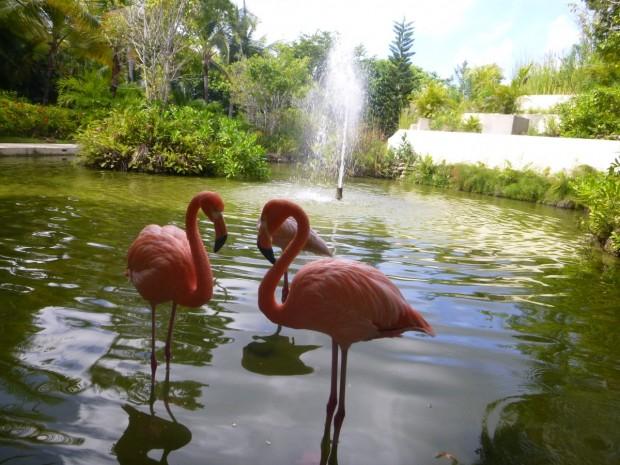 paradisus-palma-real-flamingos
