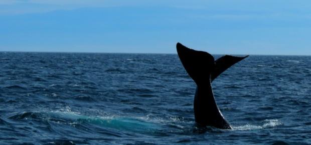 baleia-puerto-madryn