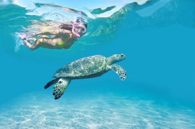 Tobago-tartaruga