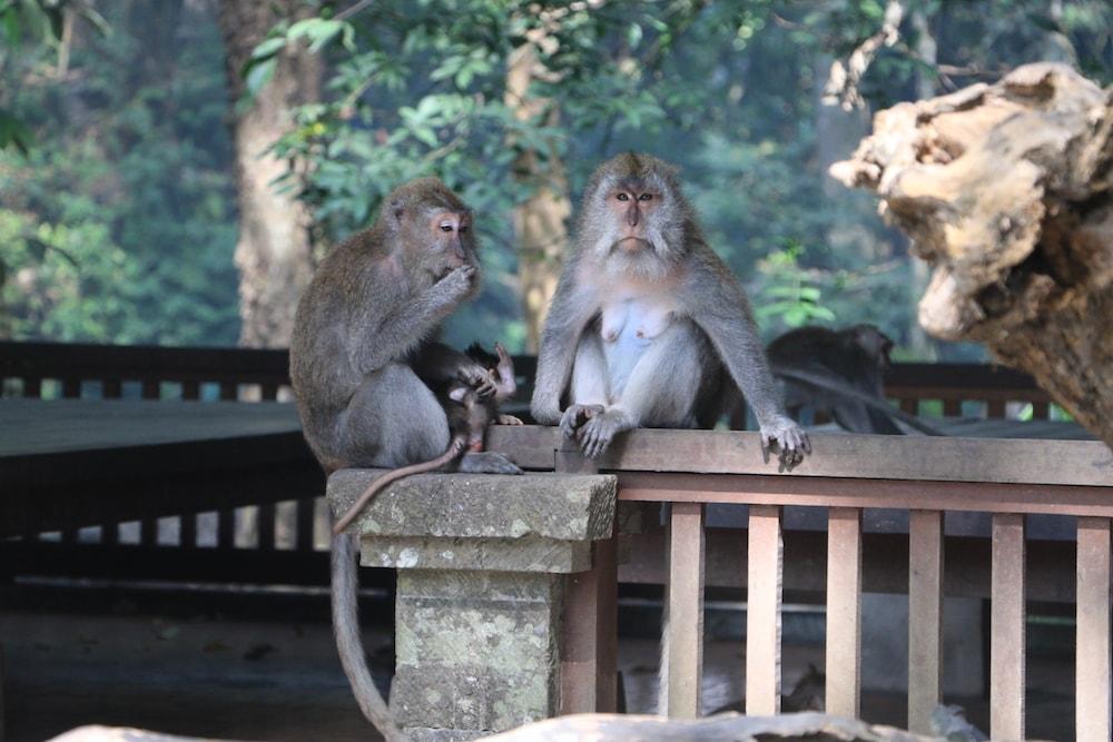 forest-monkey-bali