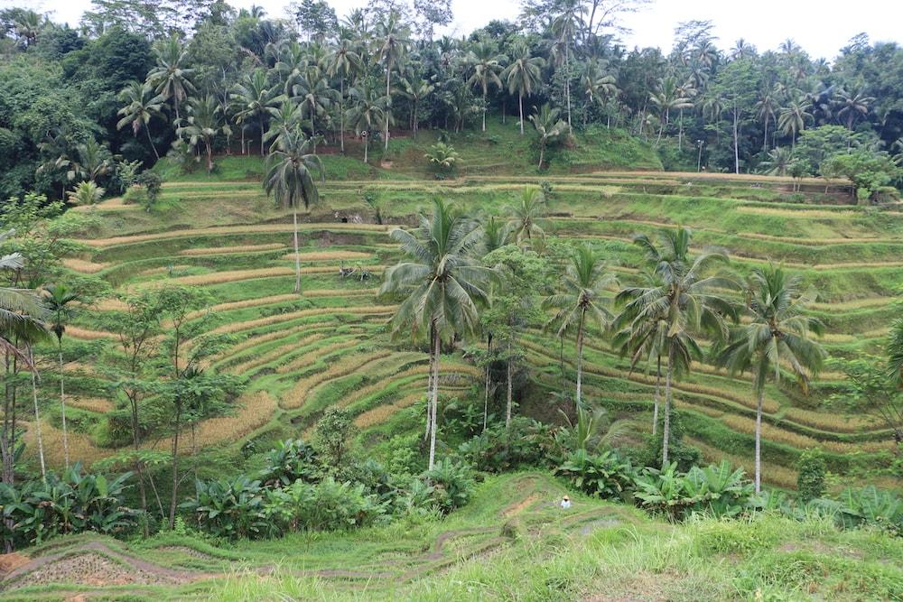 plantacao-bali