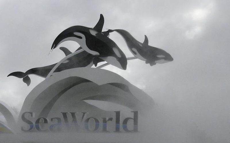 SeaWorld Is Under Investigation for Statements Made About Blackfish