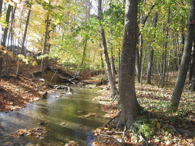 Beech Maple Forest ~ More land for allegan county forest news am the fan