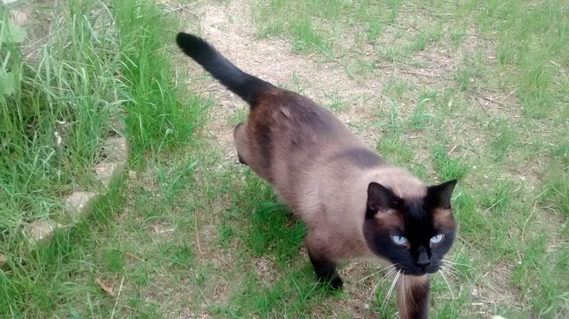 A stray cat wanders through a backyard