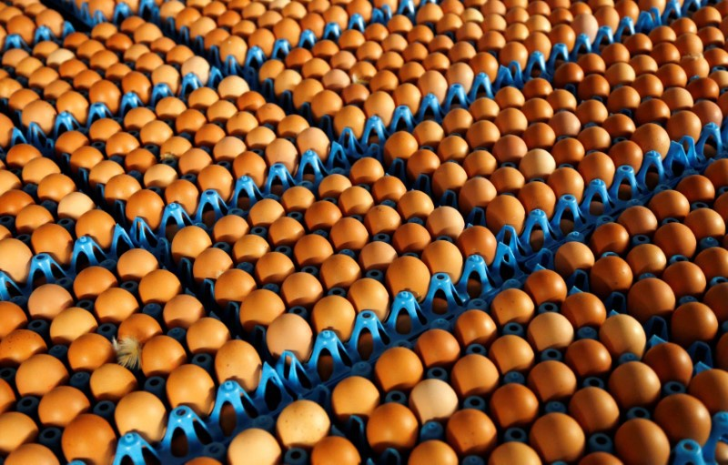 Portugal safe from contaminated eggs