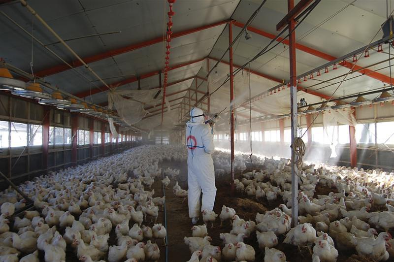 Business plan for poultry