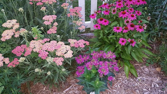 Do this now to keep your perennial flower beds healthy for a long applying compost to your bed every year or two provides most if not all the nutrients most perennials need mightylinksfo
