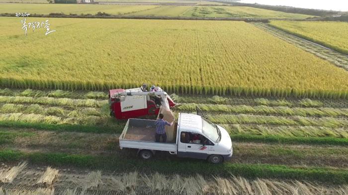 ▲ 충남 홍성군의 수확 현장, 올해 전체 농가의 쌀 생산량은 약 426만 여 톤이다.