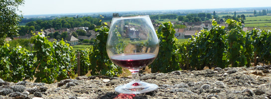 Our Burgundy Wine Portfolio
