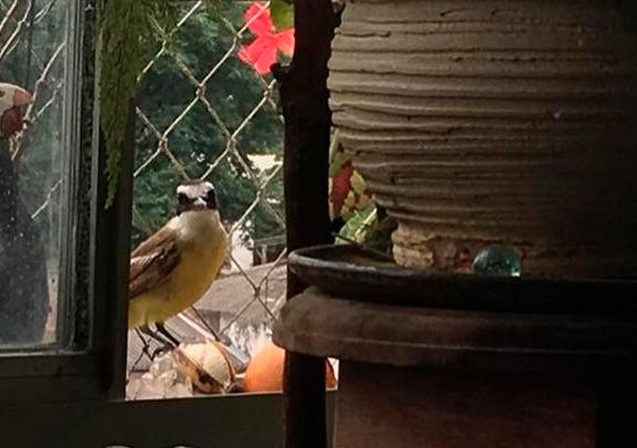 O canto dos pássaros