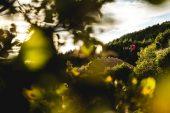 , Video: Bas Van Steenbergen – The Farm – Deity