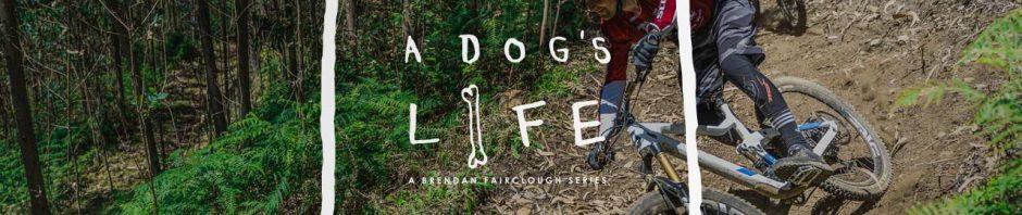 Dog's Life Season 2 Episode 1 Madeira Brendan Fairclough, Dog's Life Season 2 Episode 1 Madeira Brendan Fairclough