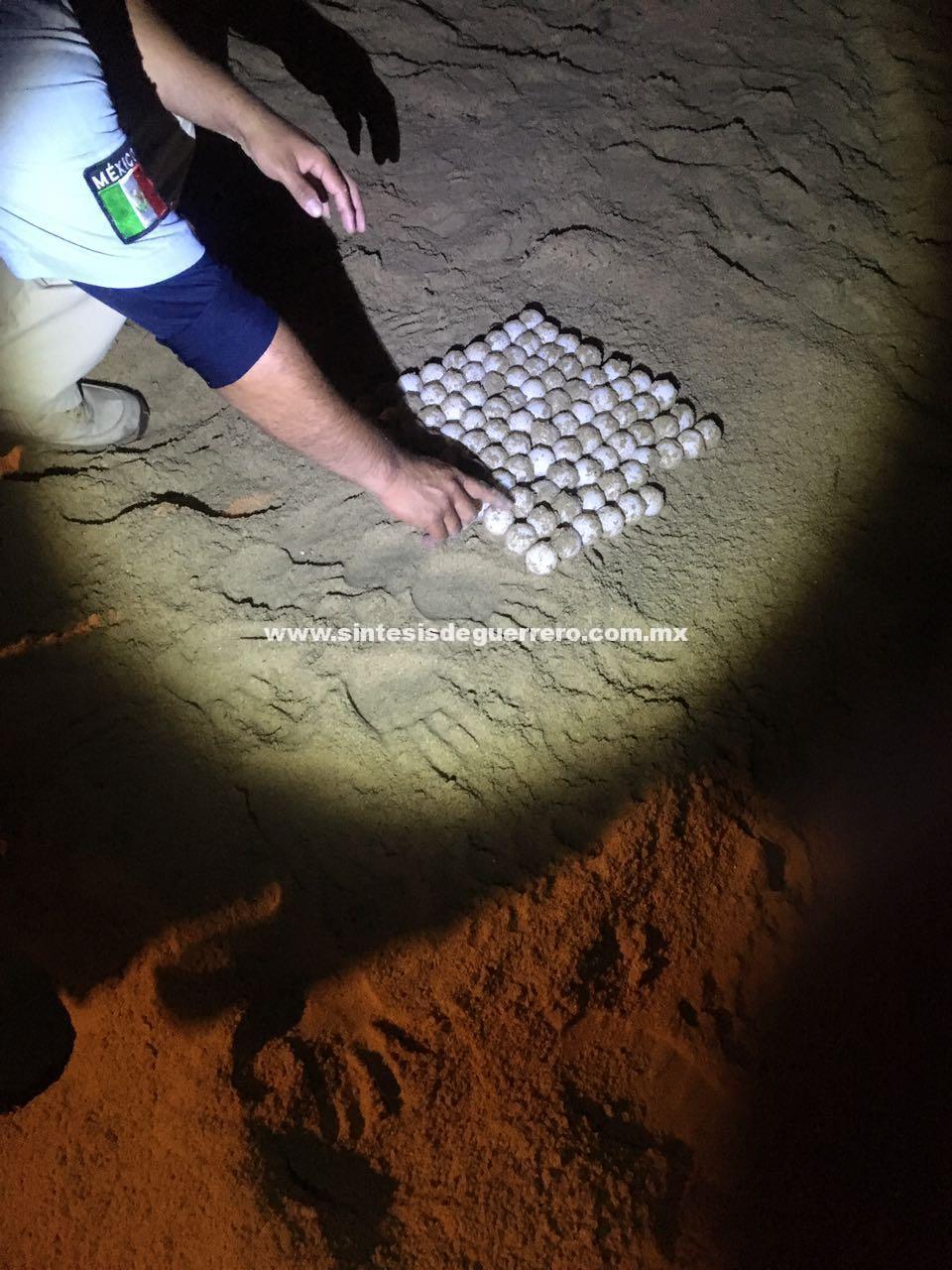 Coadyuva Policía Turística en preservación de la tortuga golfina