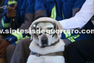 Construirán clínica veterinaria en honor a la perrita Frida