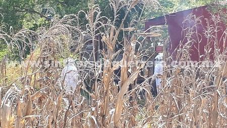 Siete lesionados por ataque de abejas en Chilpancingo