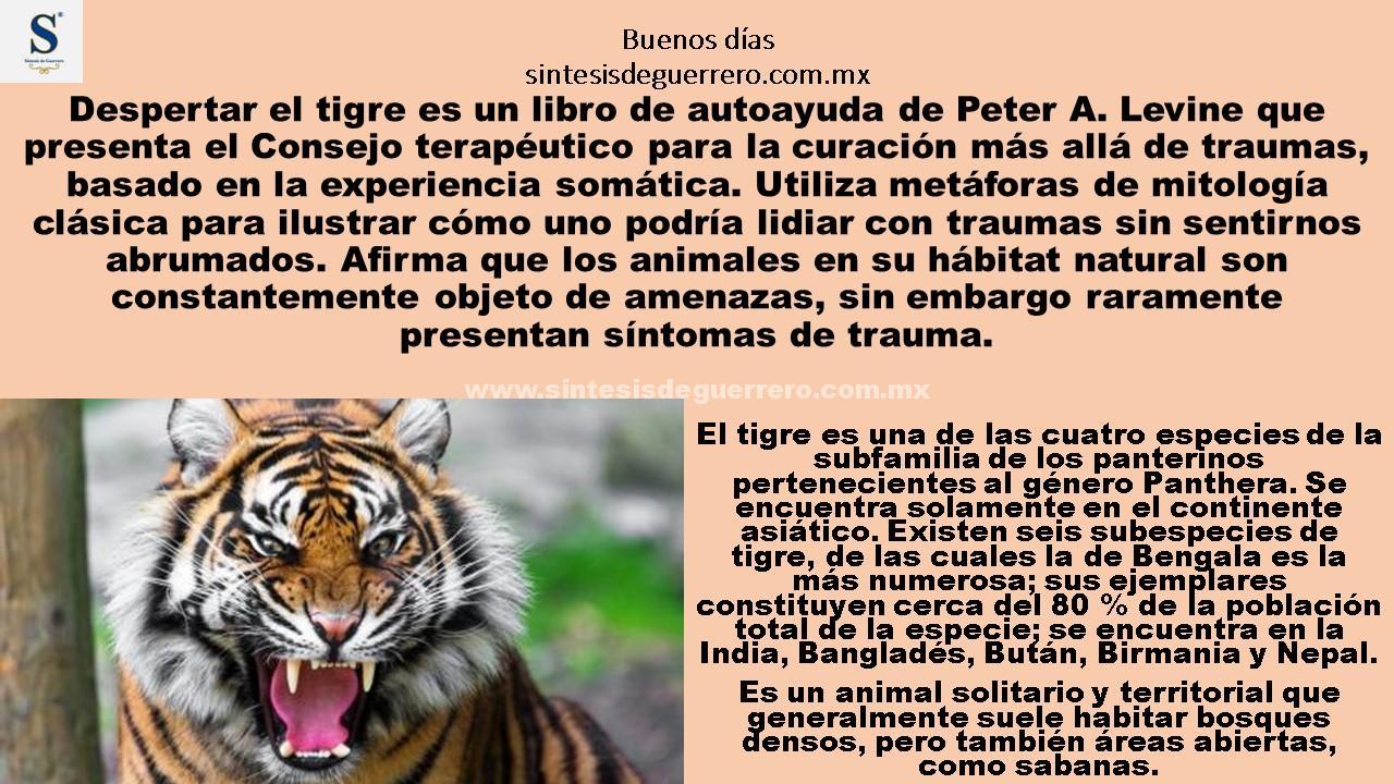Buenos días. Despertar al tigre