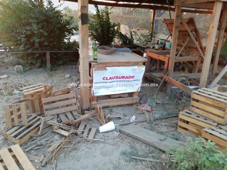 Clausura Profepa un aserradero en Guerrero y asegura 13 M3 de madera de pino